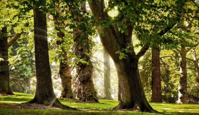 How Do Trees Communicate