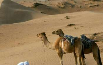 Salaat in desert